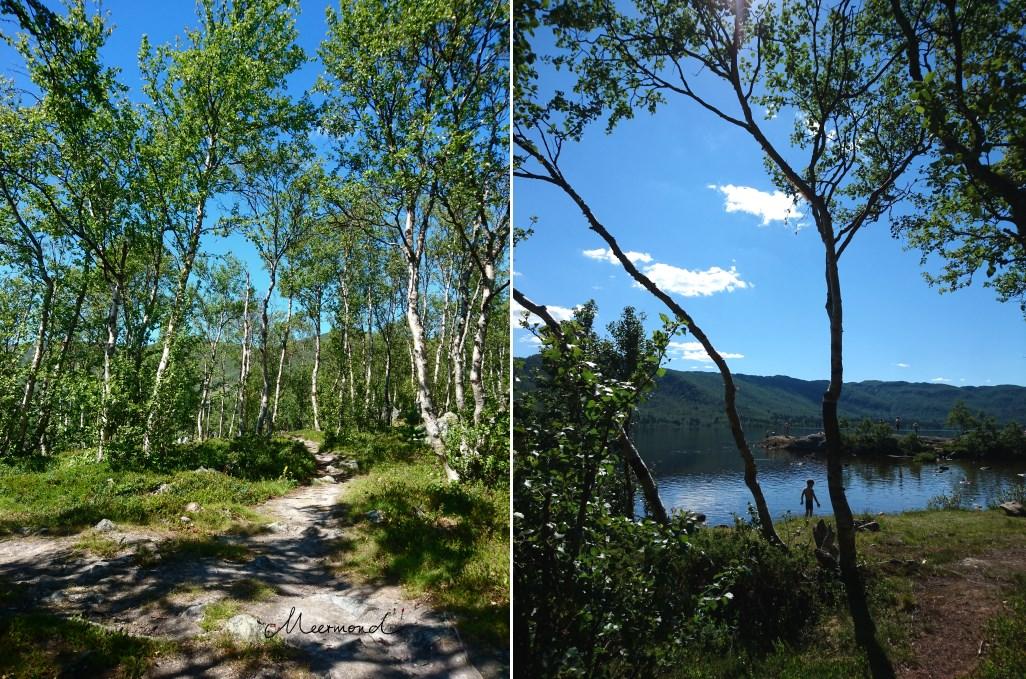 Geilo Ustedalsfjorden Sommer