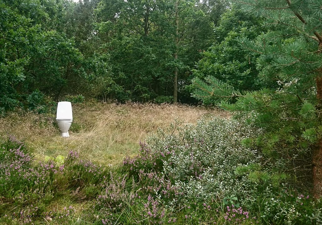 Wald Dänemark Heidekraut