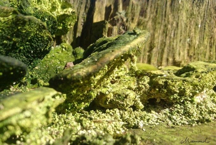 Wald Dänemark Moos Baum