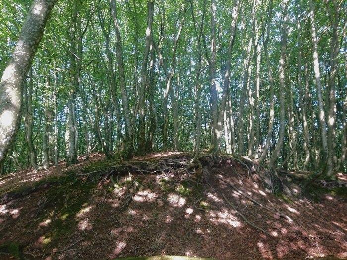 Wurzeln Baum Wald Dänemark .jpg