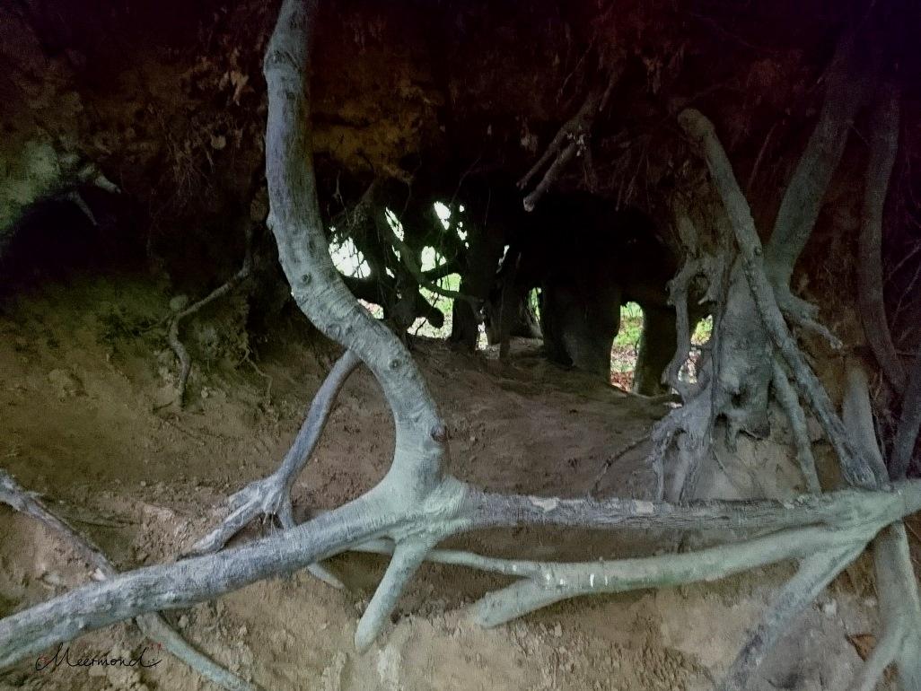 Wurzeln Wald Dänemark