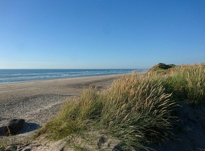 Dänemark Strand Dünen