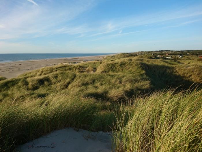 Dünen Dänemark Strand Saltum
