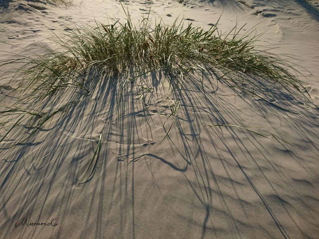 Urlaub Dänemark Dünen Gras .jpg