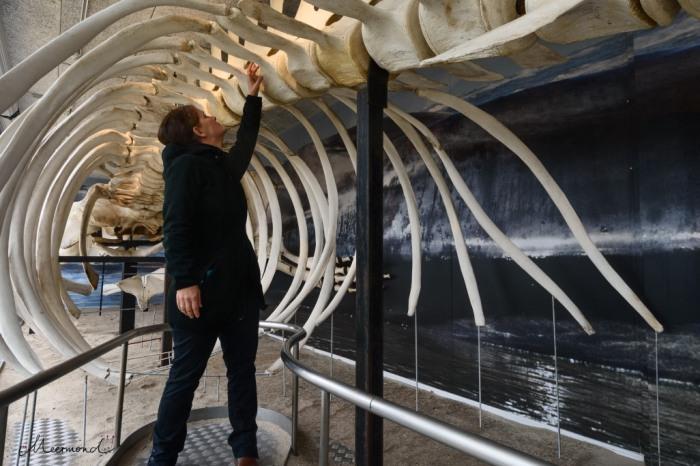 Wal Hirtshals Ozeanarium Blokhus