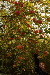 Apfelbaum Dänemark Natur Weite