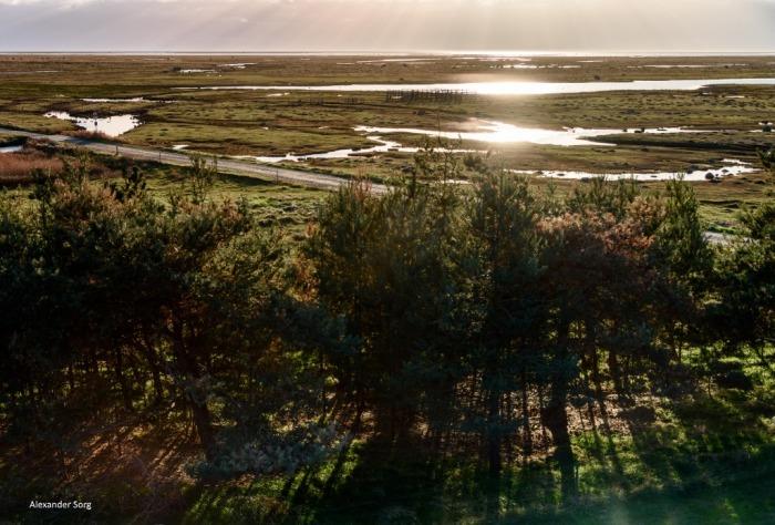 Dänemarkblog Rønner Salz Læsø