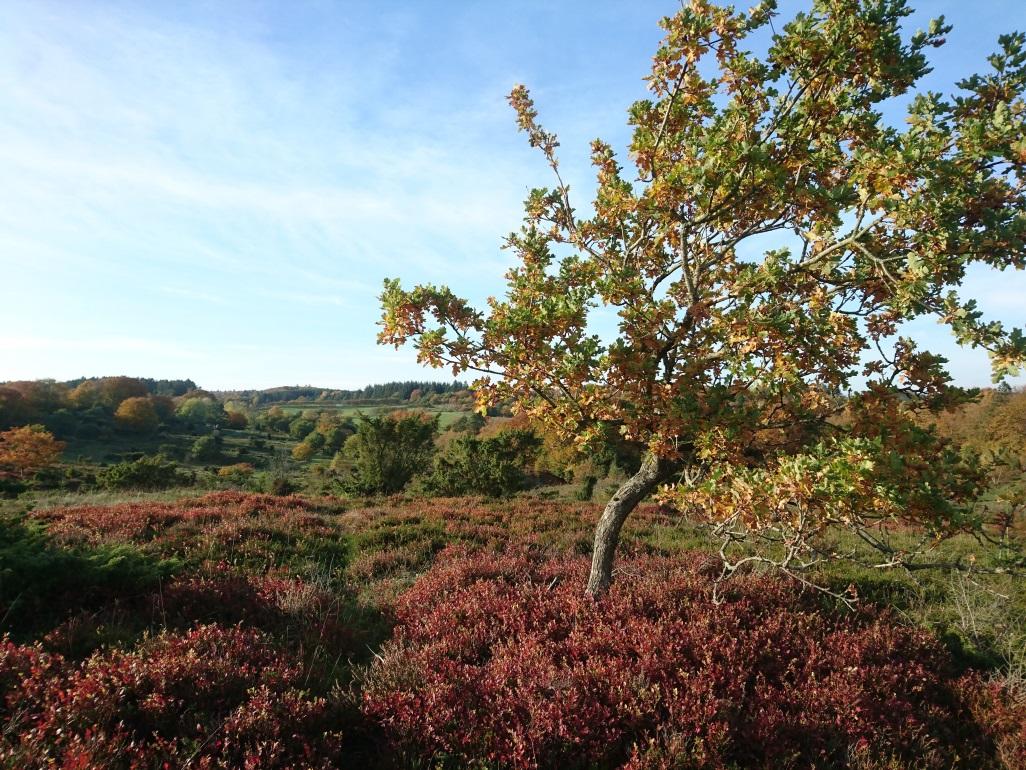 Hammer Bakker Wandern Herbst Nordjütland