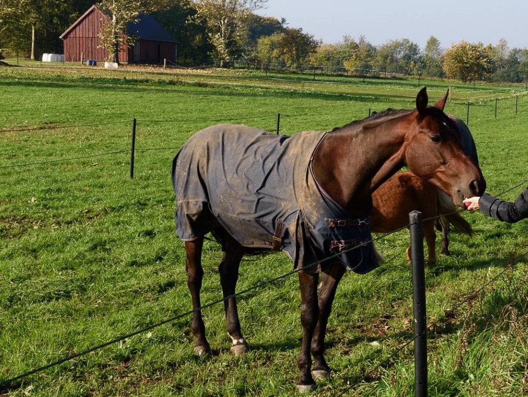 Nordjütland Dänemark Pferde.jpg