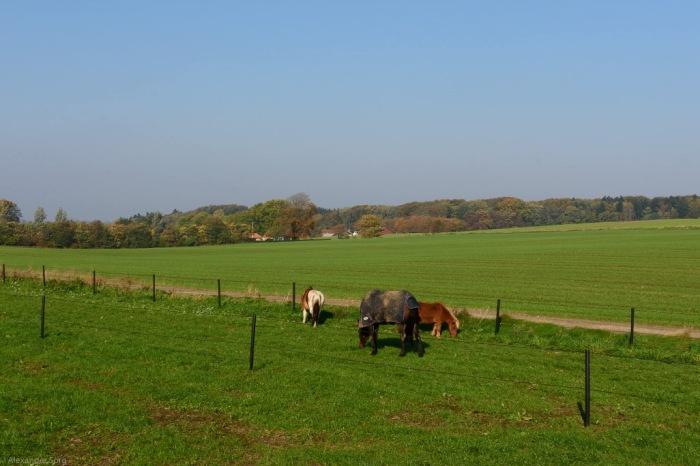 Pferde Dänemark Nordjütland.jpg