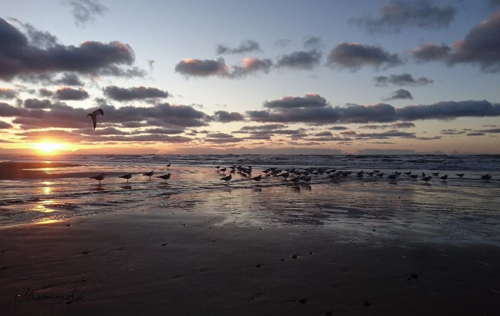 Sonnenuntergang Dänemark Blokhus November