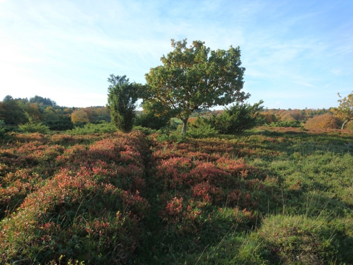 Wandern Herbst Dänemark