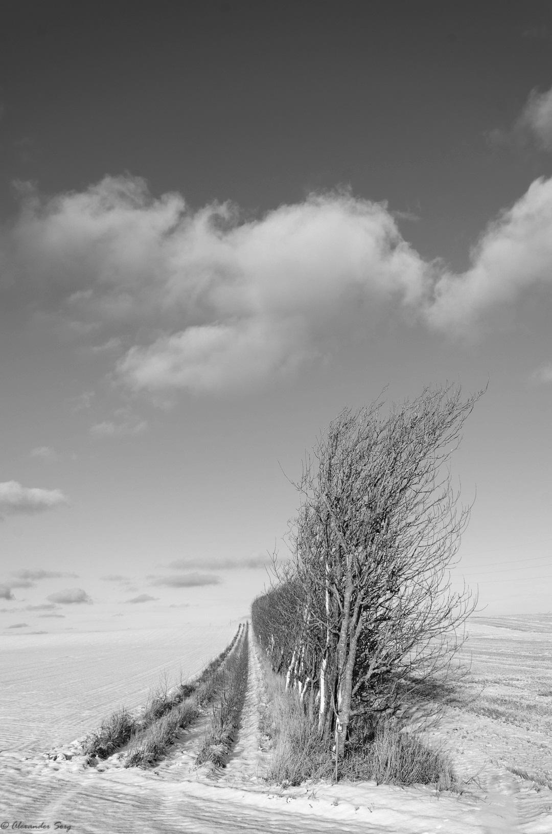 Winter Dänemark Wind dunkel Blog.jpg
